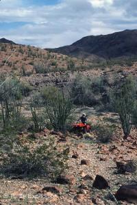 We were carefully following  trail through the cirios.