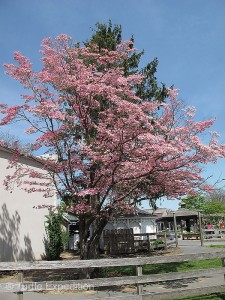 Trees were in bloom everywhere.
