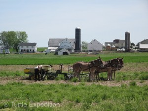 Tidy Amish farms dotted the rolling countryside. Steel wheels were norm, and five mules provided power on this farm wagon It's an Amish thing.