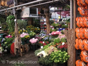 Holland is famous for tulips, but the flower market has much more to offer.