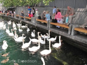 Feeding the swans on the lake is a tradition we still enjoy whenever we visit Zurich.