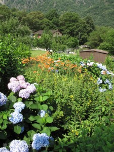 Early summer flowers were in full bloom.