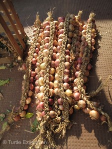 We wished we had a wall to hang these braided onions.