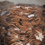 The washed slabs of cork are cooled and dried in huge bundles.
