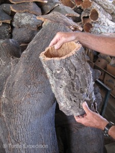 The first-growth cork harvested (being held), is very rough on the outside. Second and subsequent harvests (on the left) are much smoother.