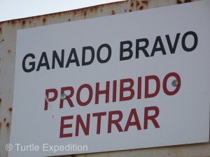 "The explicit sign, GANADO BRAVO—PROHIBIDO ENTRADA ""Brave Bulls--Do Not Enter"" gave warning of what was inside."