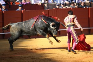 A Miura bull and the matador El Fundi are battling it out on a life and death stand-off. Feria de Abril, Seville, Spain, 2009. Photo by Alexander Fiske-Harrison