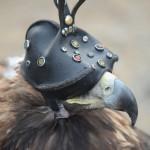 Golden Eagle Fest Part 2 Mongolia 005