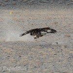 Golden Eagle Fest Part 2 Mongolia 033