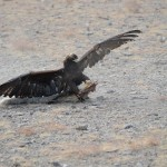 Golden Eagle Fest Part 2 Mongolia 034