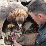 Golden Eagle Fest Part 3 Mongolia 011