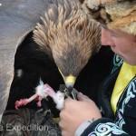 Golden Eagle Fest Part 3 Mongolia 013