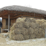 The stitched rice straw mats were rolled and stacked until future use.