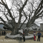 We made a wish to the Goddess Samsin who resides in the 600-year-old zelkova tree.