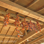 Persimmons were hung to dry in the cold winter air.