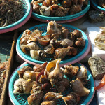With still a refrigerator full of food in our camper that needed to be eaten before we shipped it to California we resisted buying a few delicious snails, muscles and clams.