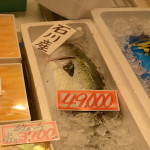 Looks like a fresh tuna, cheap at only 49,000 Yen. ($395.80). Is that per kilo or for the whole fish?