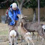 Japan Parks & Temples 23