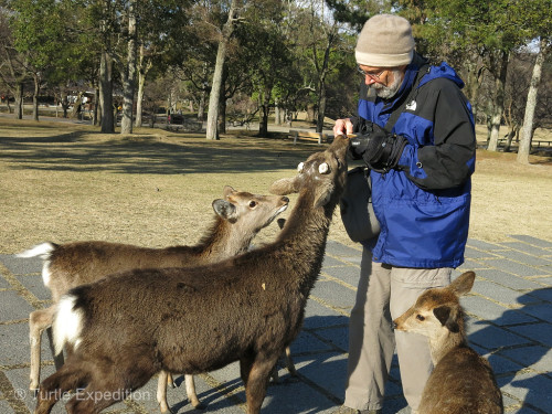 Gary is feeding the deer in Narin's City Park.