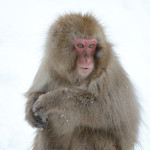 Japanese Macaques were so much fun to watch. They ignored all the dumb tourists constantly snapping photos.