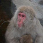 Snow Monkeys Japan 6 30