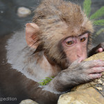 Snow Monkeys Japan 6 38