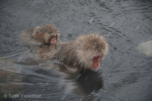 Snow Monkeys Japan 6 47