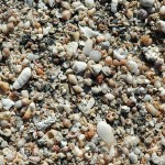The tide washed in millions of pretty shells to dry in the sun.