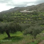 Groves of olives covered the hillsides. Greece is the second largest producer of olives in the world.