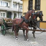 In Eskişehir, these methods of transportation must belong to the past.