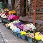 Tbilisi city dwellers seem to enjoy flowers.