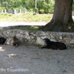 During our lunch stop at a quiet village square, we were joined by goats seeking a shady spot.