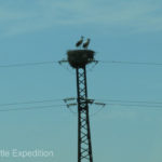 Who needs a tree for a nest? It was fun to see the storks, a childhood memory for Monika.