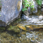 A natural creek flowed out of the base of a rocky cliff and meandered right past our camp.