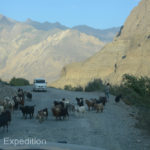 Herds of cows on the road were replaced by herds of goats and sheep, perhaps a sign of the increasing altitude.