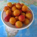 We could resist buying another half bucket of freshly picked high-altitude apricots.