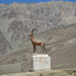 "An occasional monument or roadside alter always included the reminders of the Marco Polo sheep, now on the ""near threatened"" list."