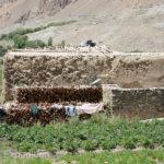 Tajikistan 7 051