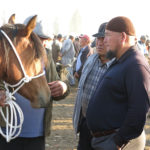 Serious horsemen discuss the virtues of the animals for sale.