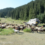 Our only neighbors at our camp in the Karakol Valley National Park were sheep, goats and horses.