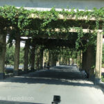 "To give cooling shade during the intense summers, many streets were covered with grapevine trellises. The sign read, ""Ornamental Grapes, Do Not Pick""."