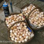 Maybe fresh eggs or maybe hard boiled?