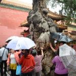 China Blog 23 039
