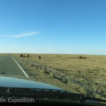 Horses and camels grazing near the road gave us a feeling that we had entered a special place.