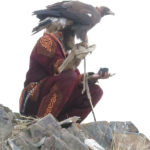 After the eagle's hood had been removed on top of the nearby hill, the bird was waiting for her master's call to catch the prey.