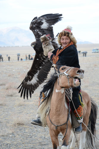 Once the eagle landed on her trainer's glove the galloping horse was quickly brought to a stop.