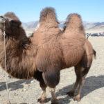 Mongolia Blog 5 050