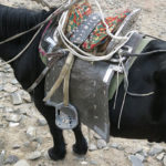 Not exactly a typical western saddle. I recall going for a short ride back in 1996 in another part of Mongolia using a saddle like these. I can tell you it might change your voice after a long ride.