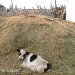 Hay was stockpiled for the cold winter ahead.