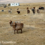 Mongolia Blog 6 032